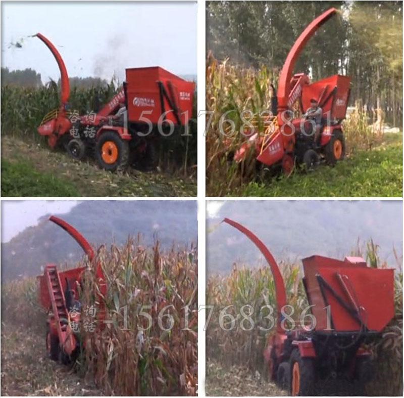 茎穗兼收玉米收割机现场